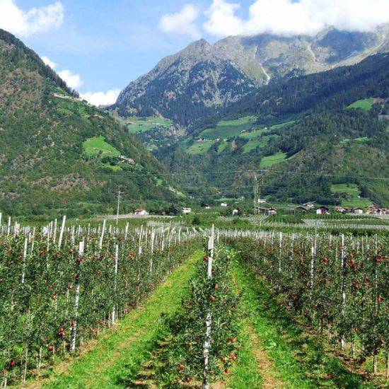 Bio trifft Tradition – Mit dem eigenen Bauerngarten beim Gast punkten