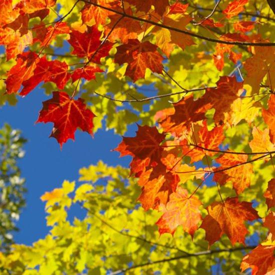 Von Schnitzeljagd bis Blätter sammeln – Freizeitaktivitäten unter freiem Himmel sorgen für Abwechslung