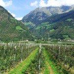 Bio trifft Tradition - Mit dem eigenen Bauerngarten beim Gast punkten