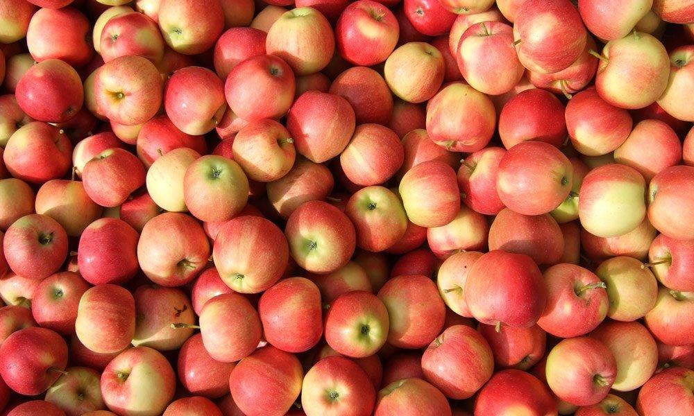 äpfel Zu äpfeln